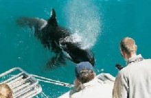 Whale and dolphin cruise Auckland